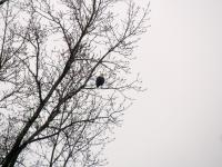 Some of the first photos I took with my new camera (Canon PowerShot SX30 IS) included my first wild bald eagle sighting!