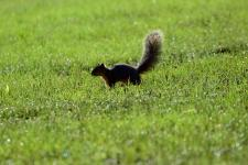 A squirrel in Coal Miners' Park in St. Charles