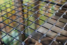 Close-up of a cage outside in the rain