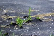 Plants pushing up through an asphalt driveway