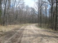 Picture of the woods at the end of my bike route, during the first bike ride of the year