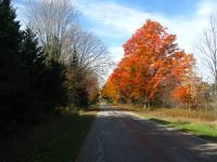 Nice autumn trees during a bike ride