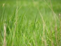 Depth of field photo of a field of grass