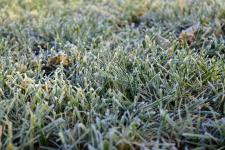 Frost on the grass early in the morning