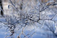 Branches of a tree after freezing fog