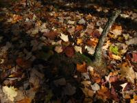 The forest floor in mid-autumn
