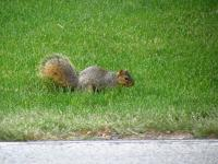 A squirrel I saw while biking/geocaching