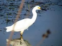 We stopped at the Ottawa National Wildlife Refuge on our way home from Solon and saw some great egrets from the car