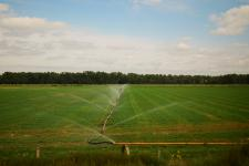 Field being irrigated
