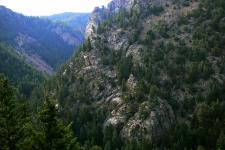 Cliffside covered in trees in the Rocky Mountains